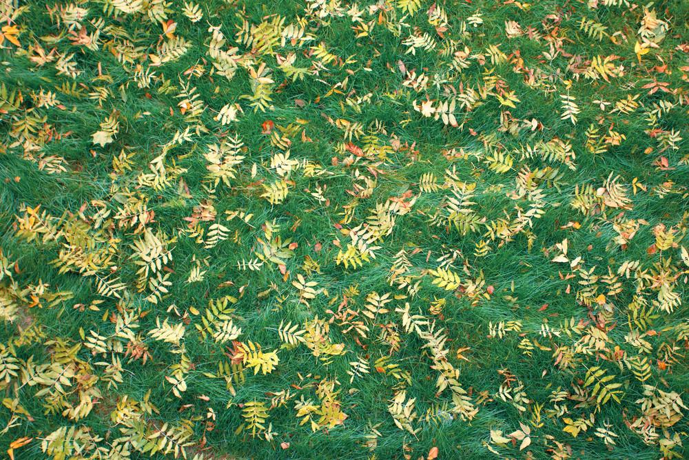 Fallen leaves on green grass background