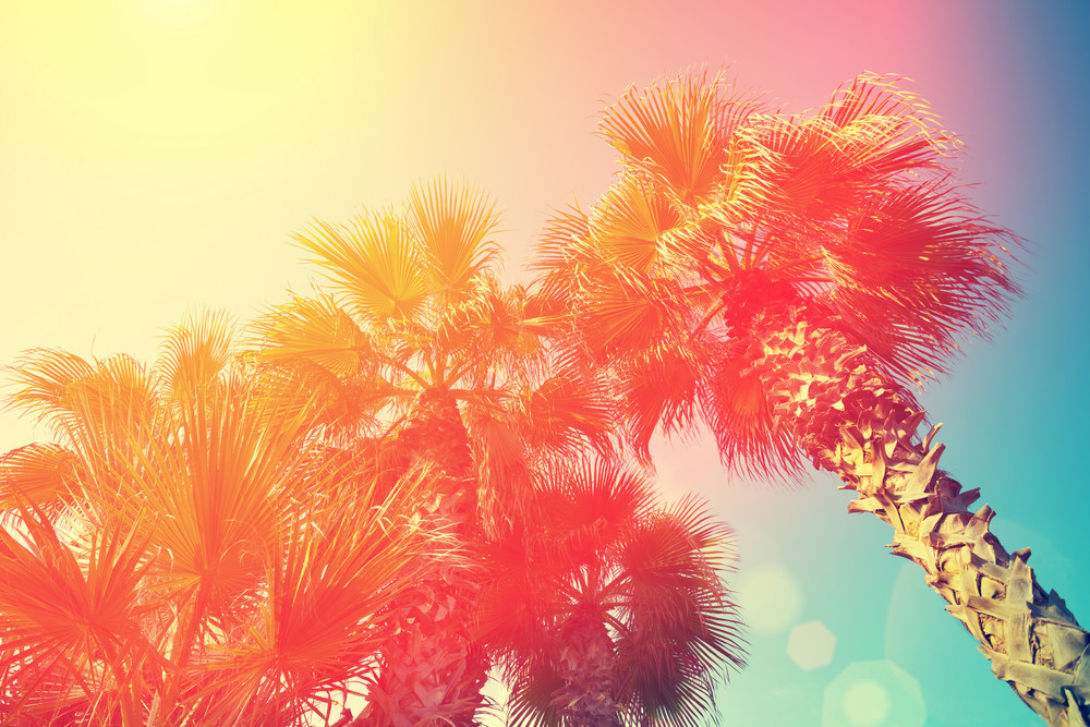 Vintage frame with tropic palm trees against sky