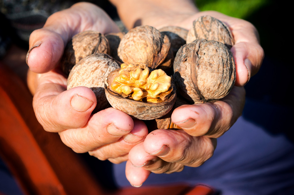 Walnuts In Hands
