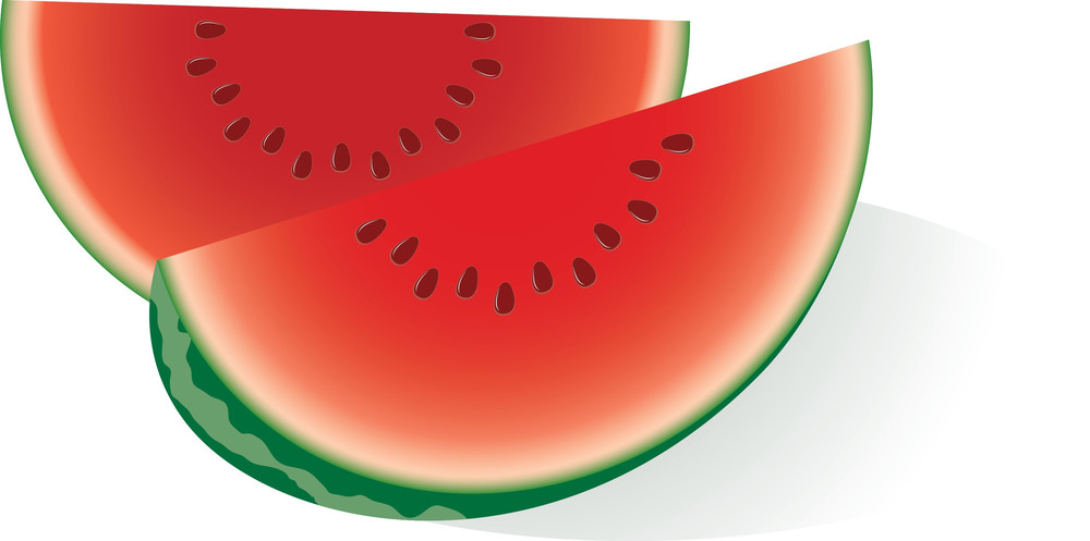 Water Melon. Vector.