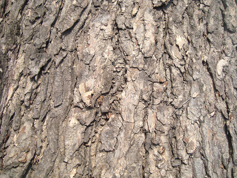 Weathered_tree_bark