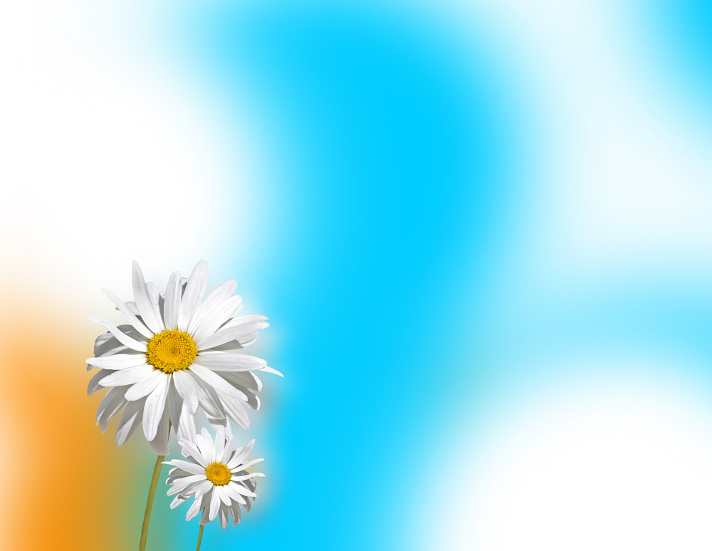 White Flower Abstract Background