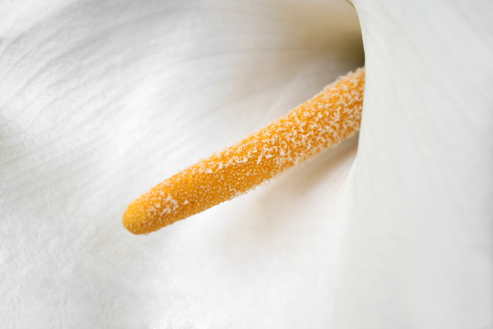 White Flower In A Close-up Image
