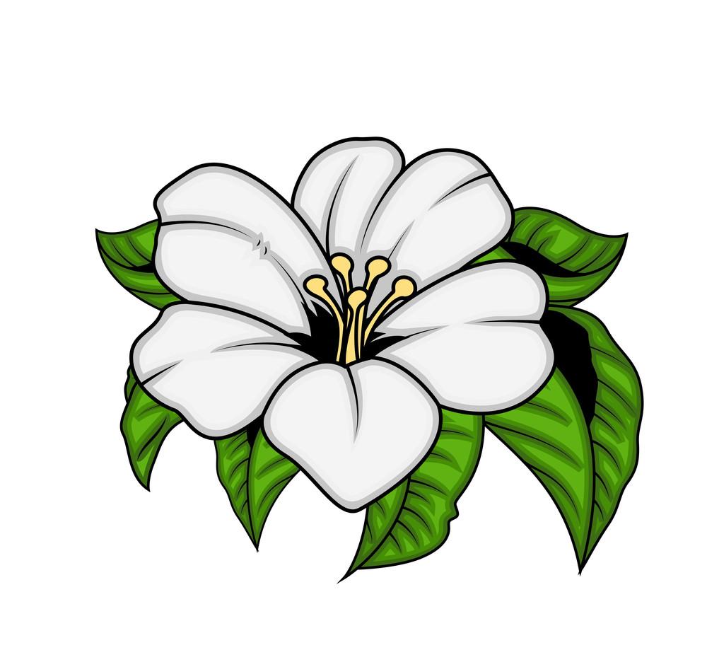 White Flower Vector