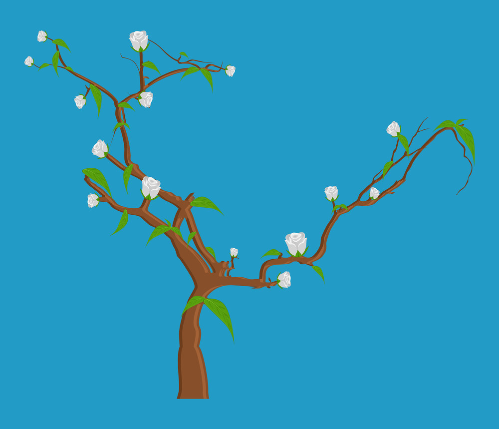 White Flowers Branches Vector Illustration