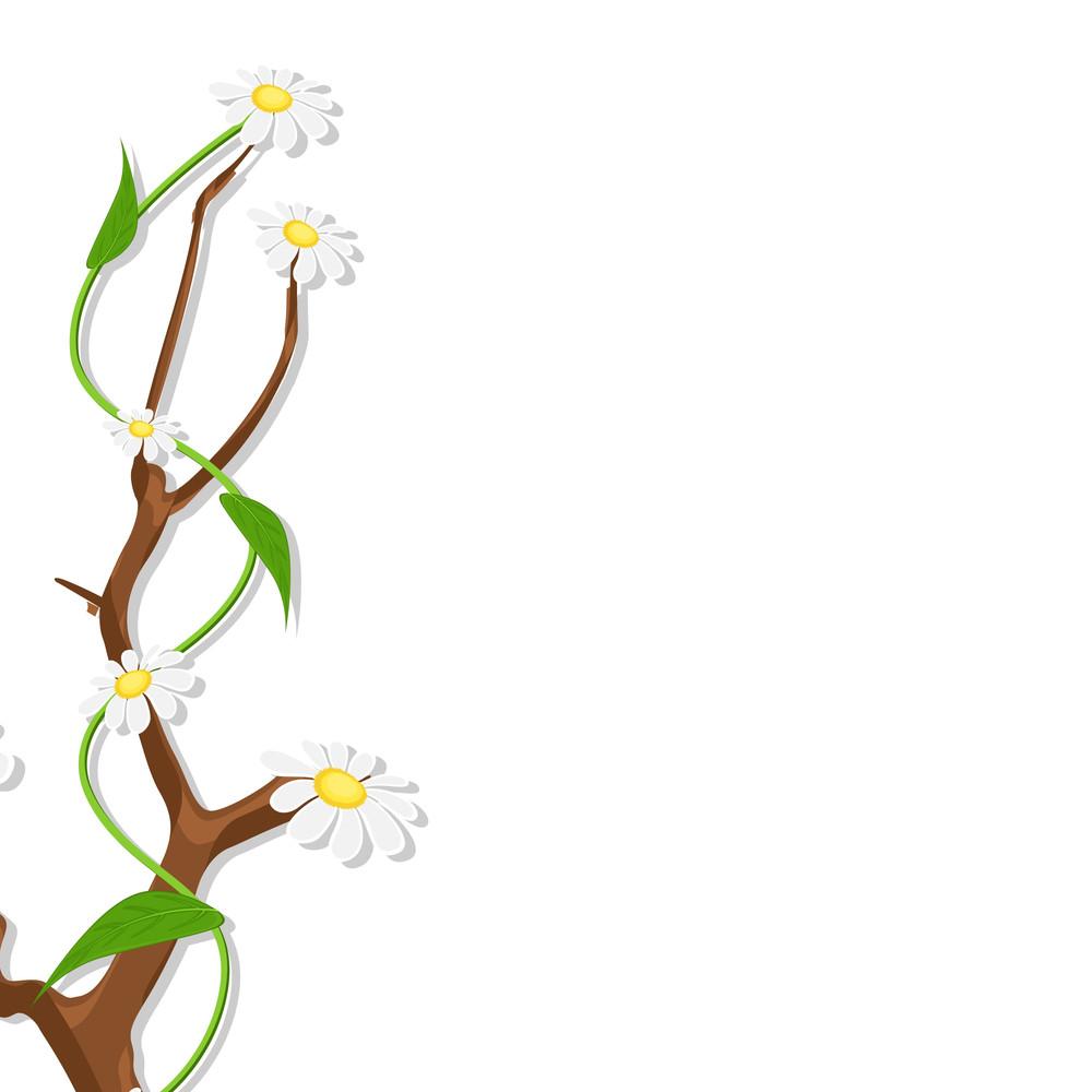 White Flowers Template Design