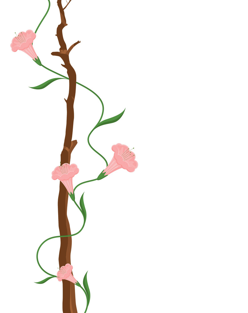 White Flowers Vector Greeting