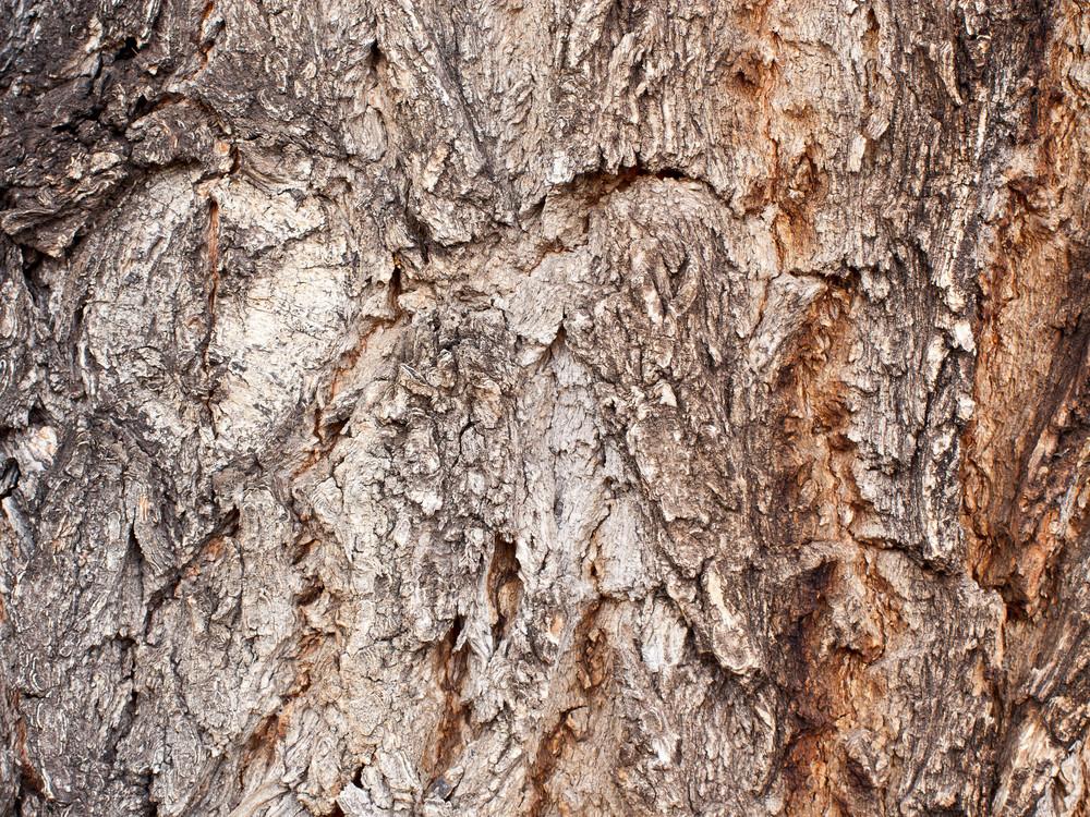 White Pine Bark Horizontal Wood