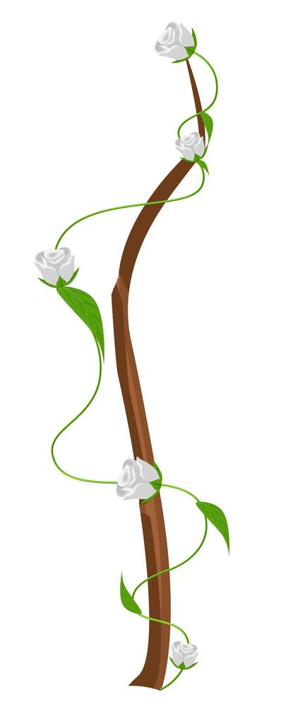 White Roses Vector Branch