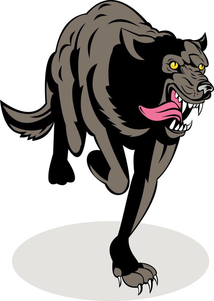 Wild Dog Wolf Attacking Running
