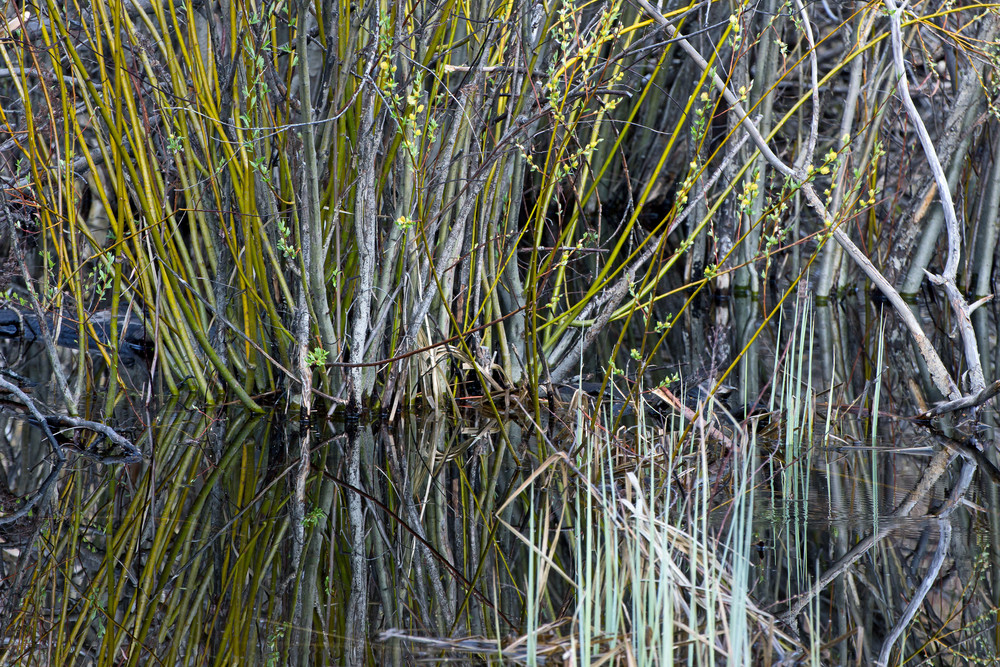 Wild Grasses In Water