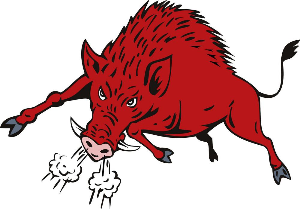 Wild Hog Jumping