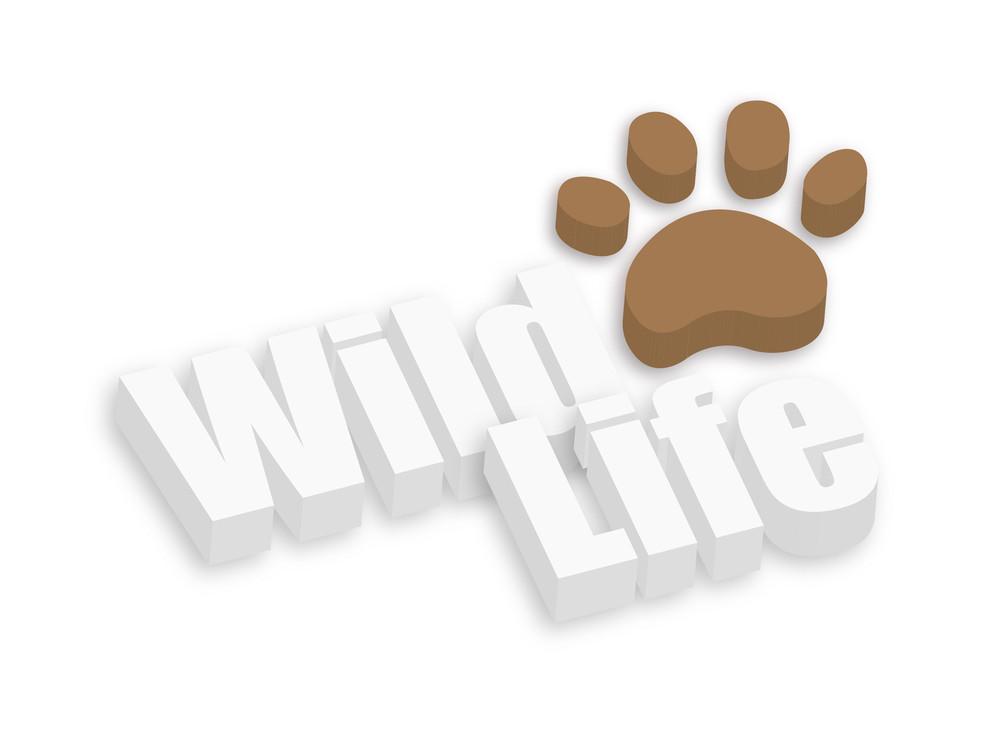 Wild Life Animal Paw