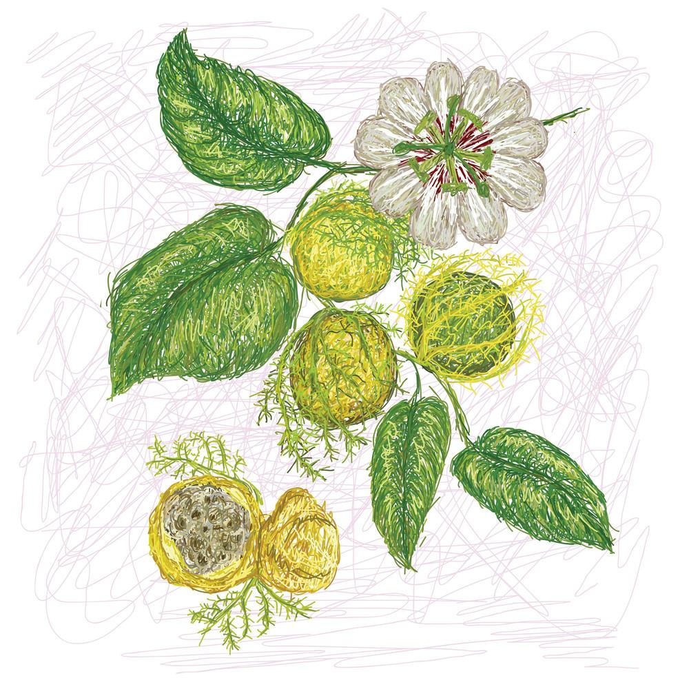 Wild Passion Fruit