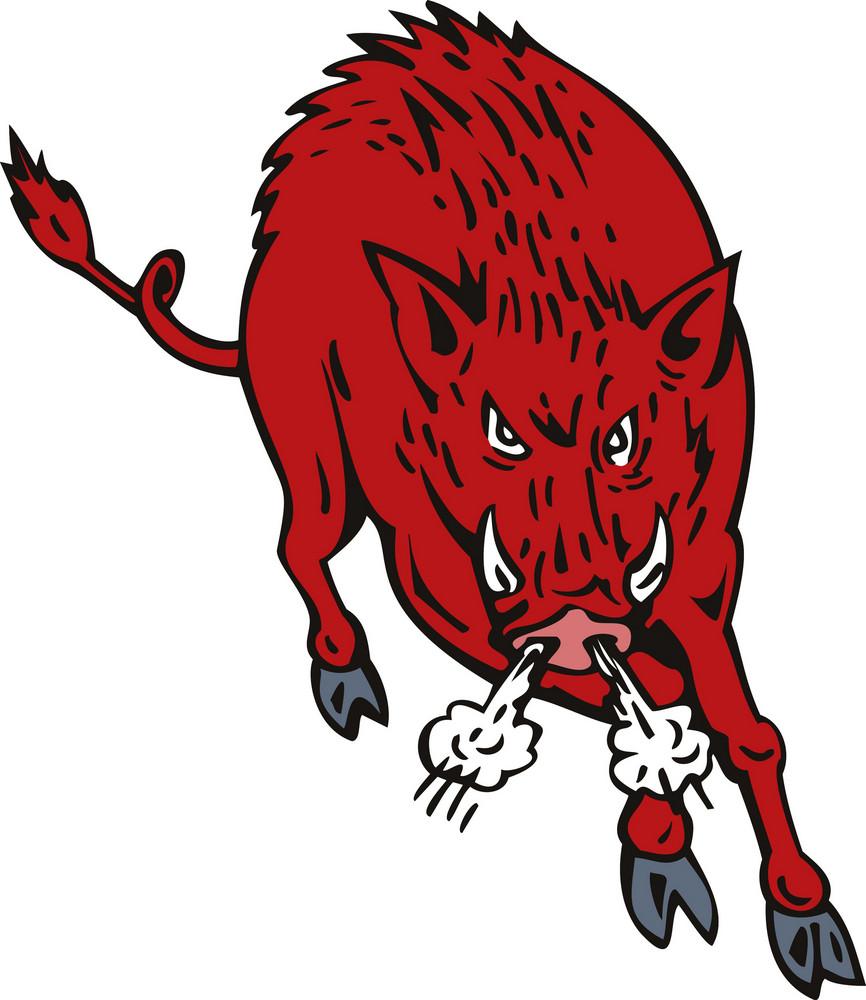 Wild Pig Boar Jumping