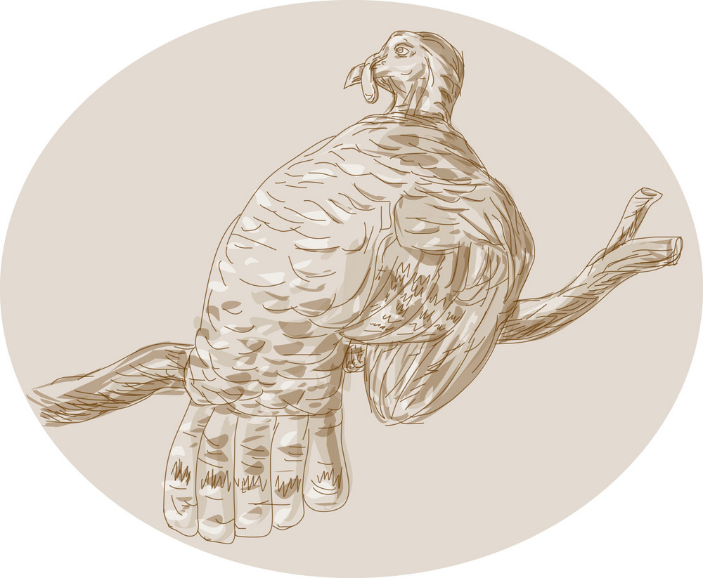 Wild Turkey Perching On Branch Sketch