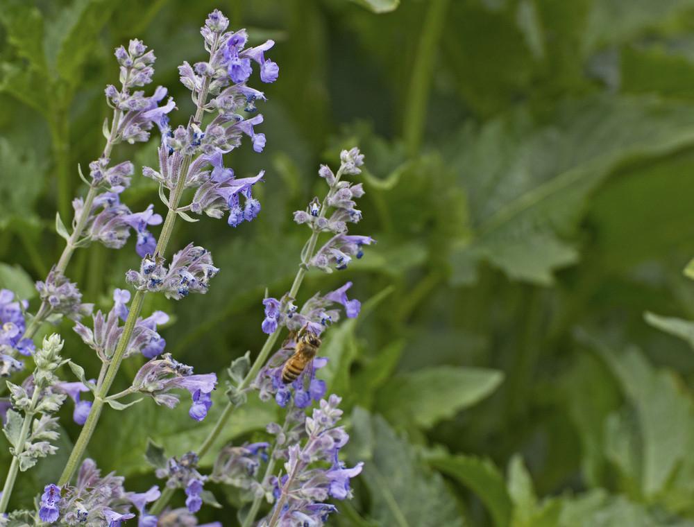 Wildflower Twig