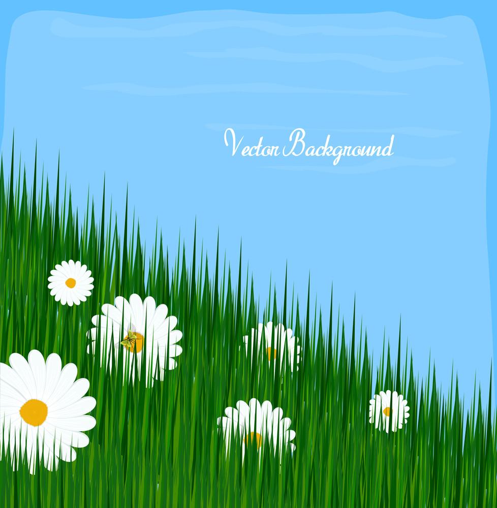 Wildflowers Grasses Background
