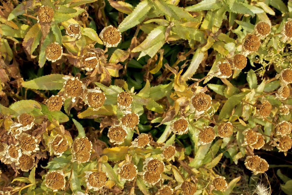 Wildflowers Texture