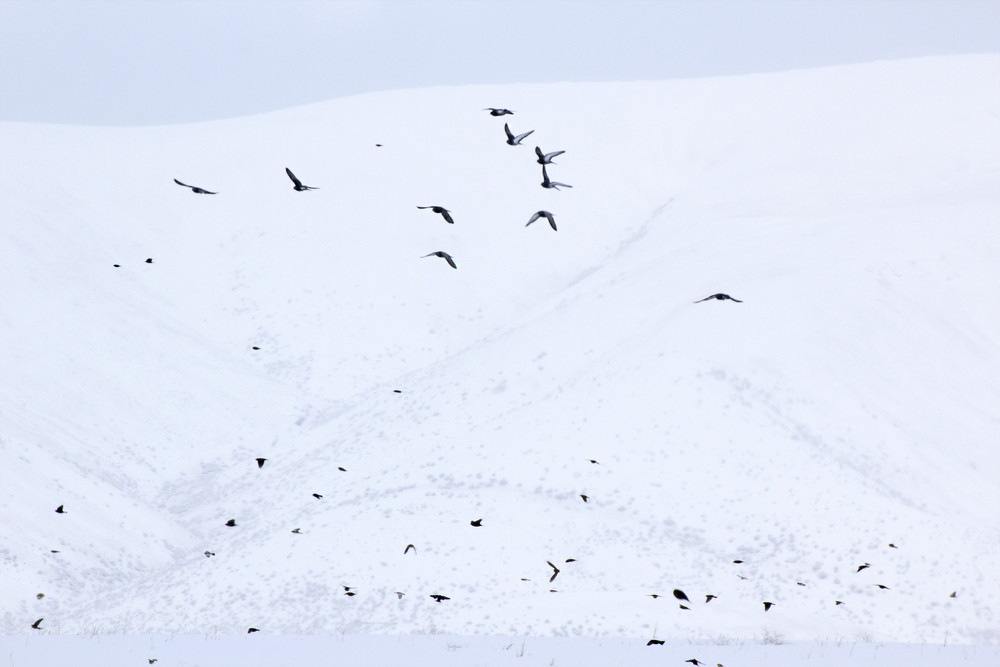 Winter Birds Flying