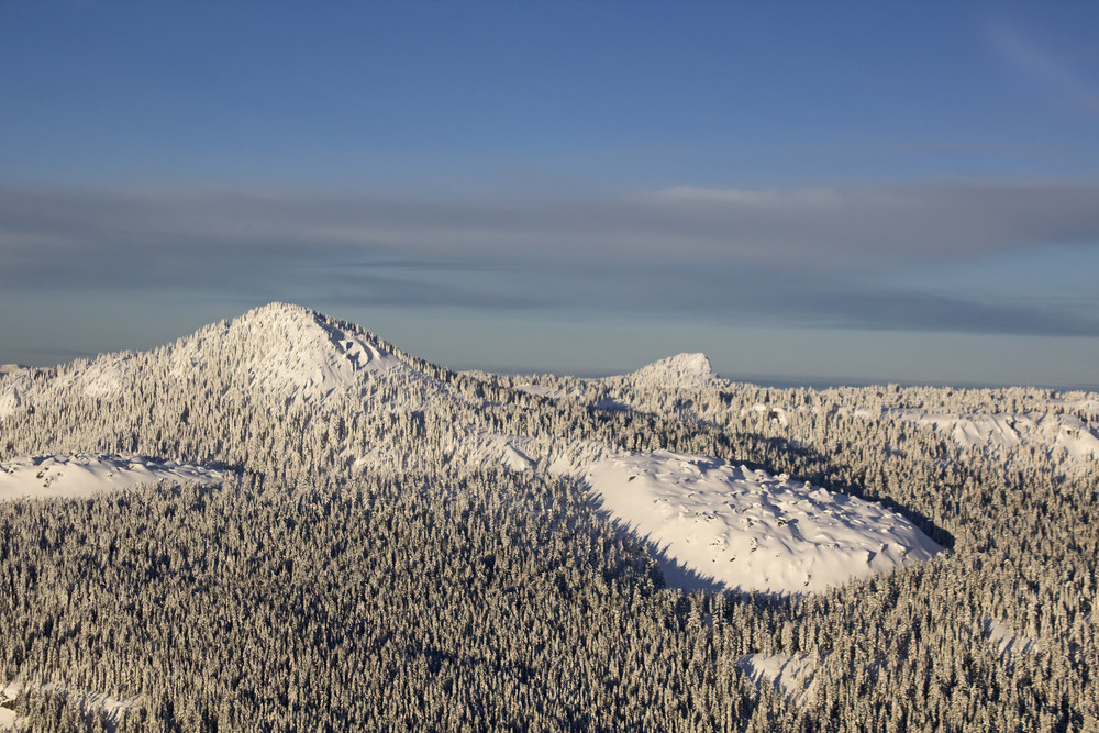 Winter Forest Aerial
