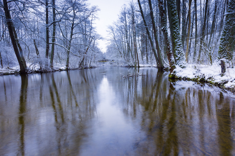 Winter forest with beautiful river. Trees reflecting in water of river. Beautiful winter landscape