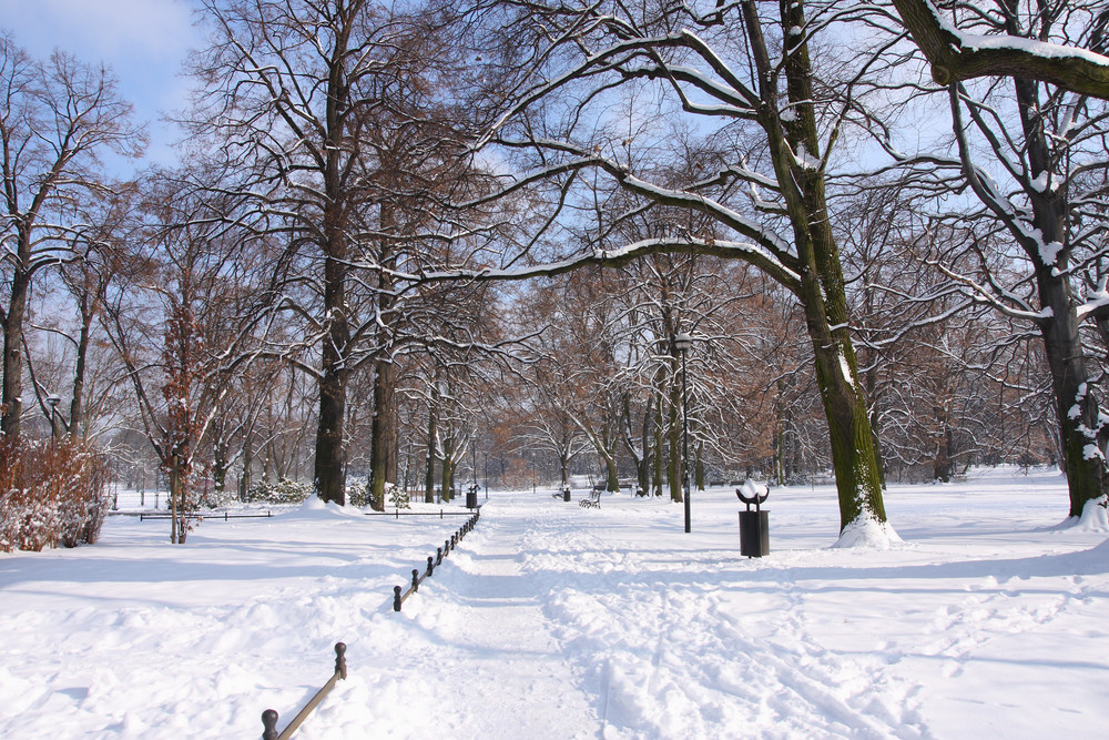 Winter In The Park.