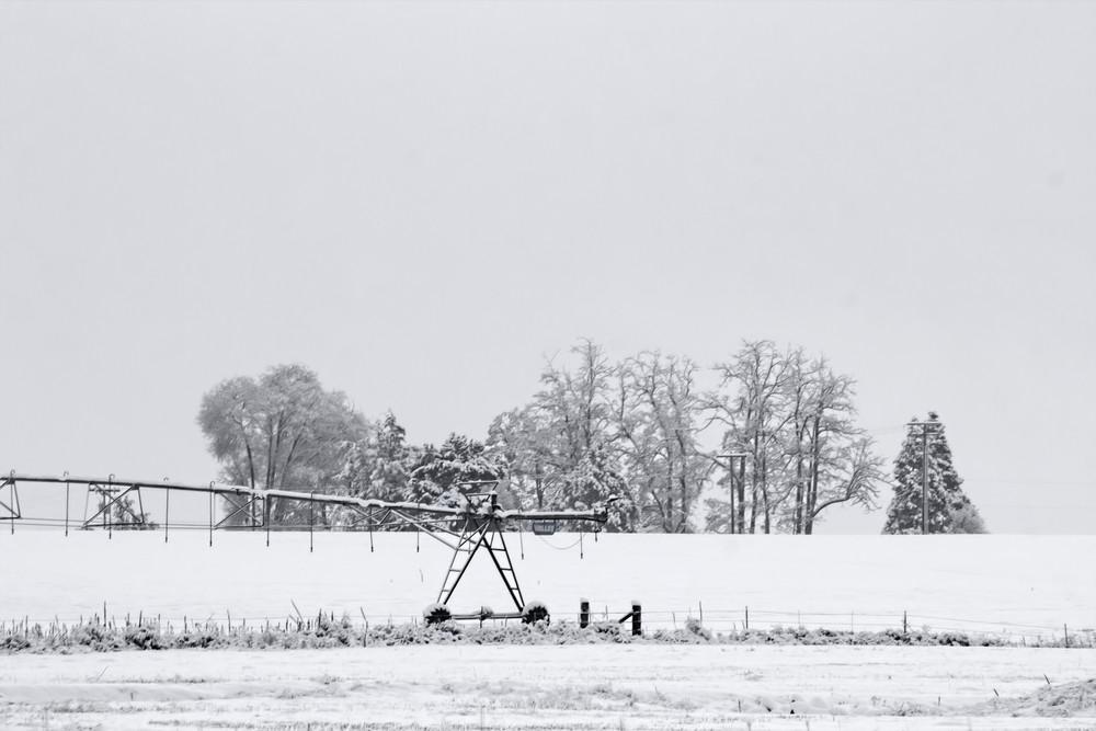 Winter Tree Landscape