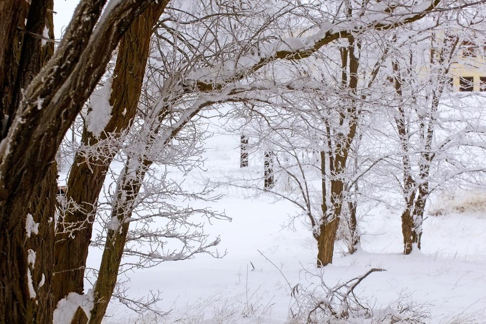 Winter Trees Landscape 236