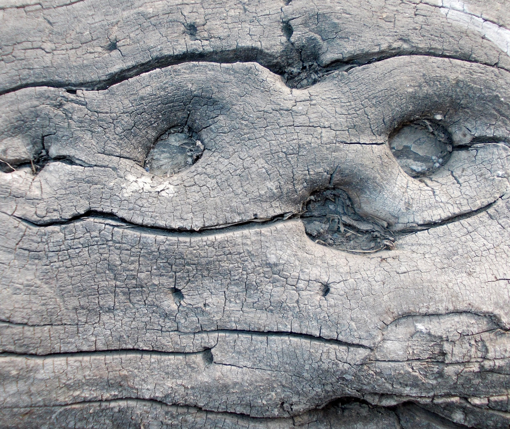 Wood Background Texture 36