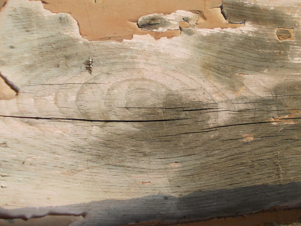 Wood Background Texture 49