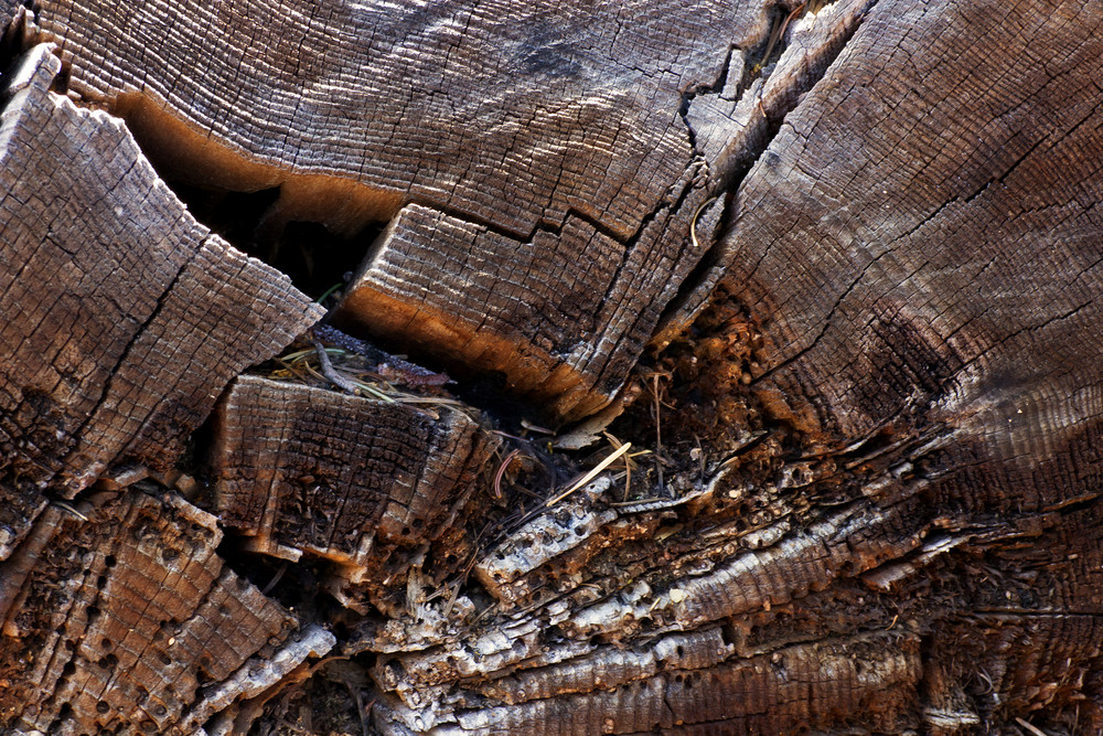 Wood Background Texture 4