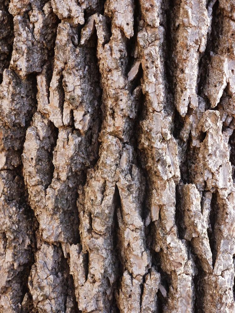 Wood Bark 13 Texture