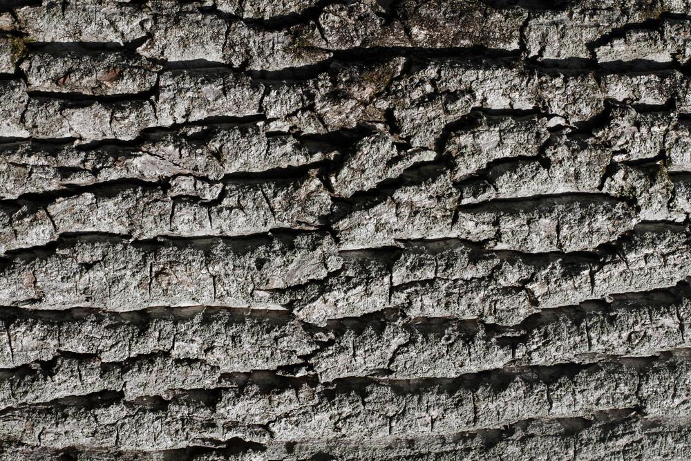 Wood Bark 17 Texture