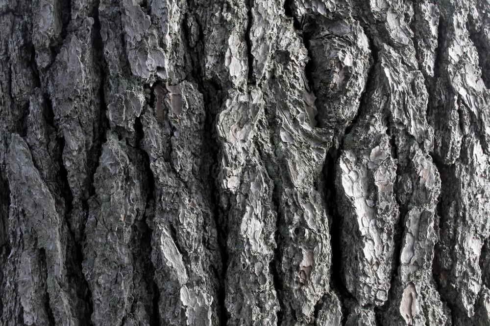 Wood Bark 2 Texture