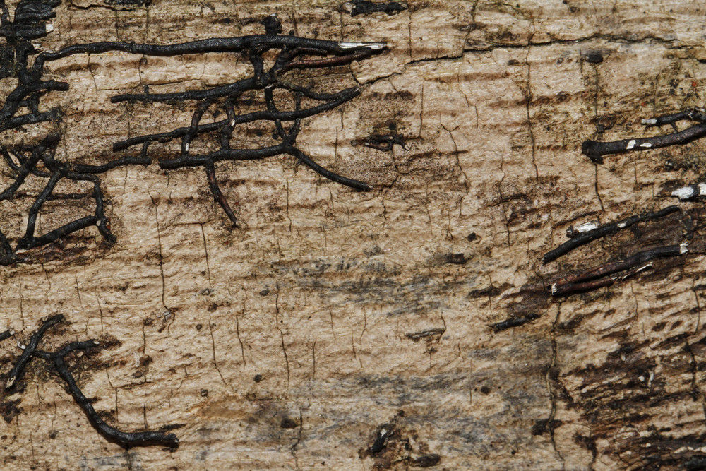 Wood Bark 23 Texture