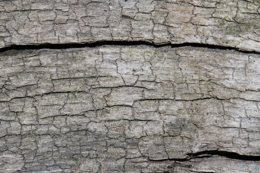 Wood Bark 24 Texture