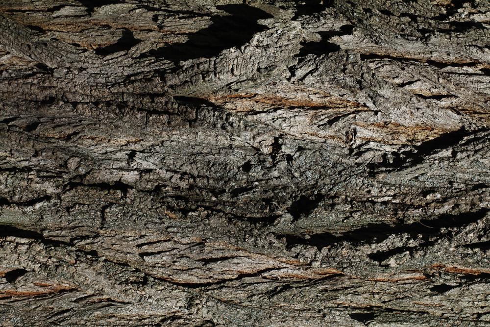 Wood Bark 29 Texture