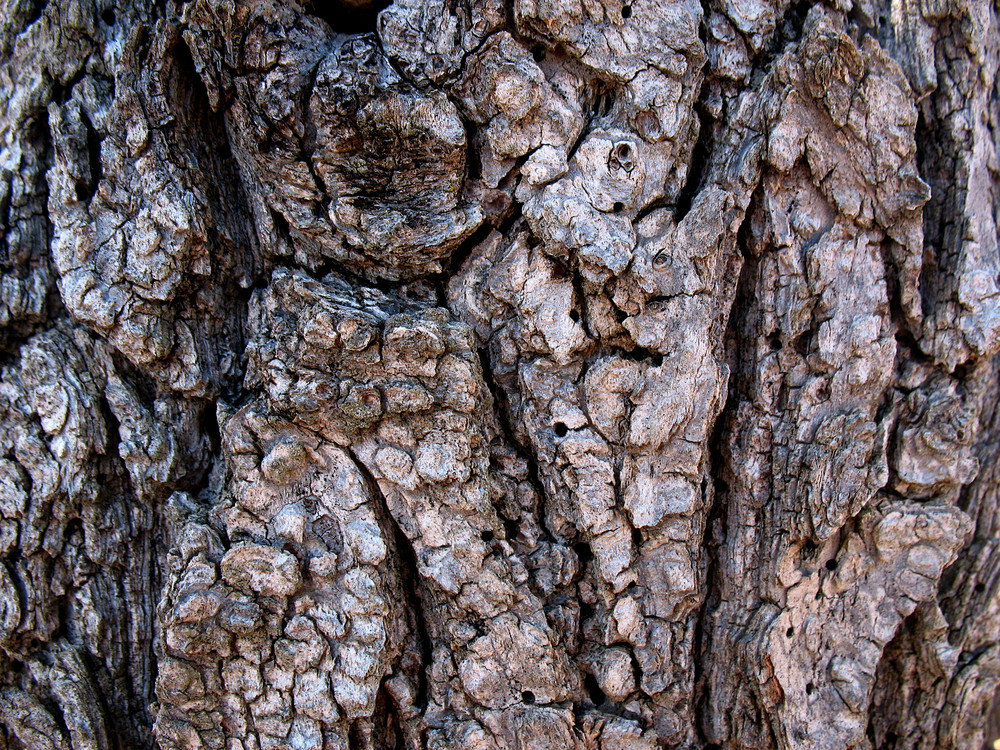 Wood Bark 32 Texture