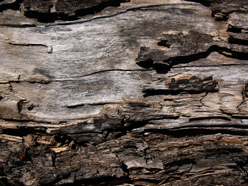 Wood Bark 36 Texture