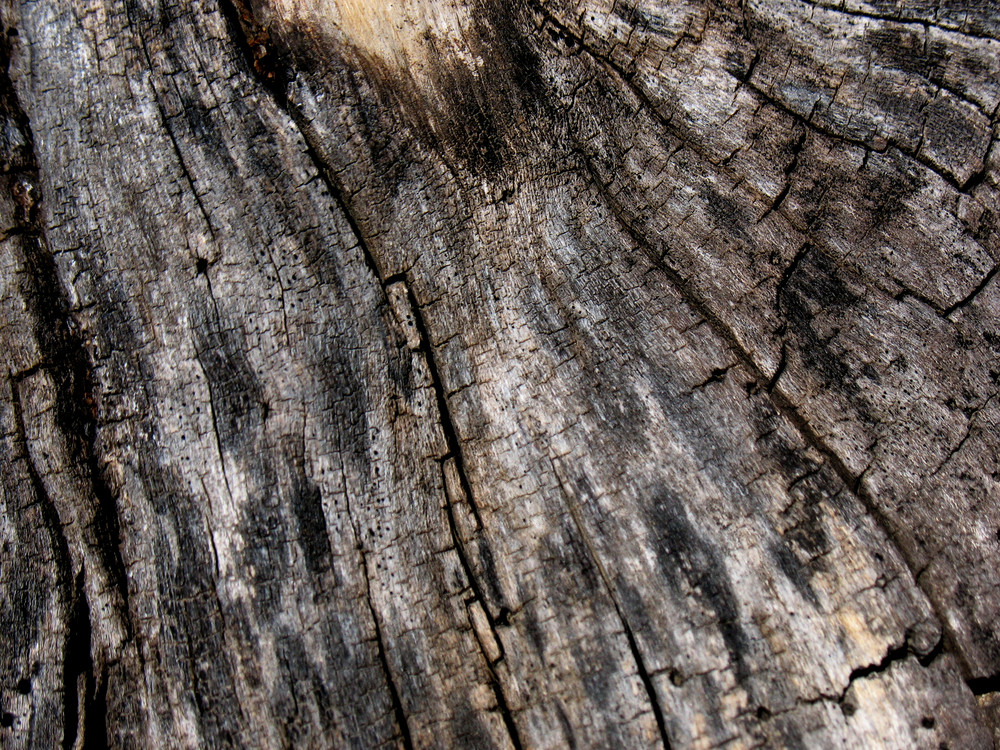 Wood Bark 37 Texture
