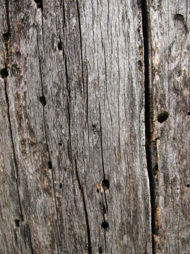 Wood Bark 41 Texture