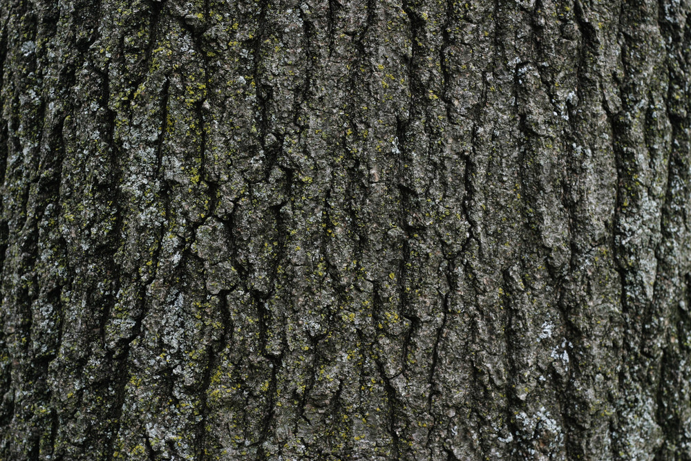 Wood Bark 43 Texture