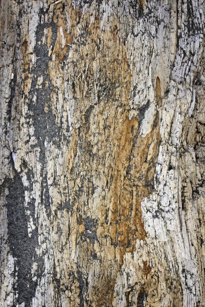 Wood Bark Texture 15