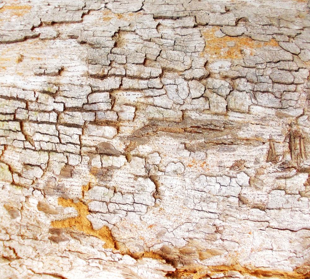 Wood Bark Texture 25