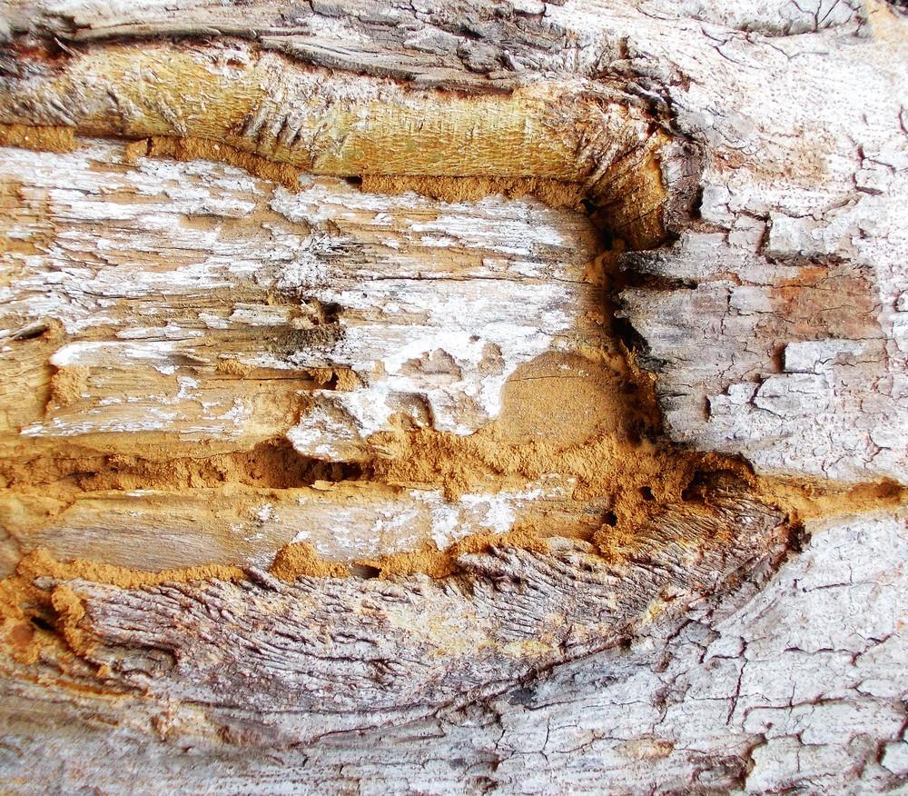Wood Bark Texture 29