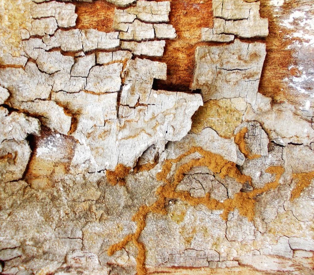 Wood Bark Texture 34