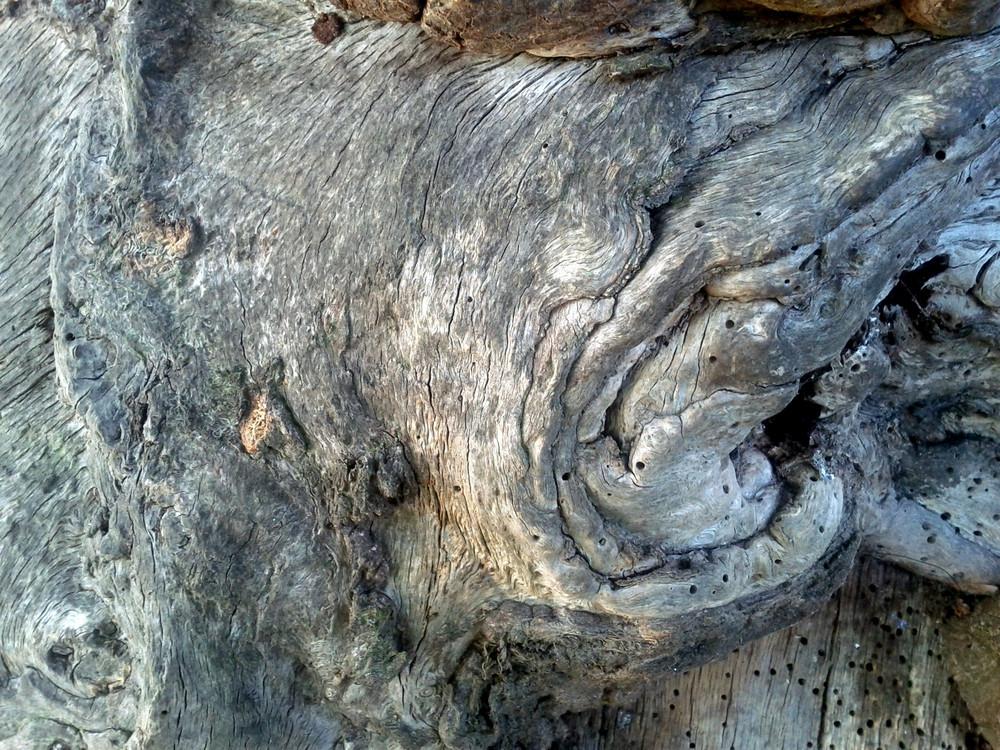 Wood Gnarled 4 Texture