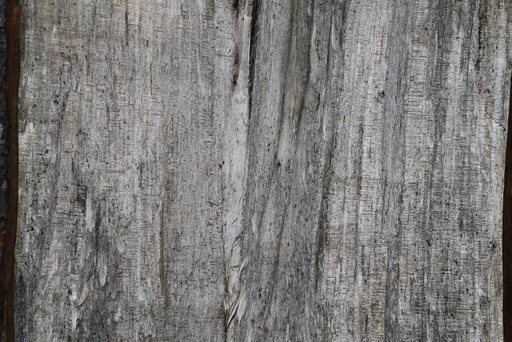 Wood Grain 58 Texture