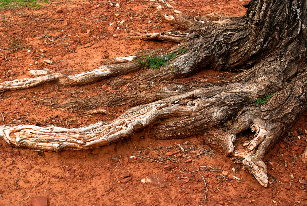 Wood Roots 5 Texture